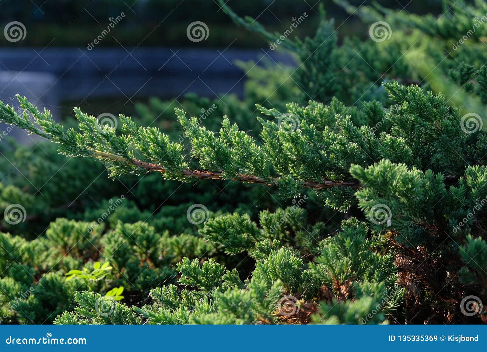 Dept поля и зеленого цвета