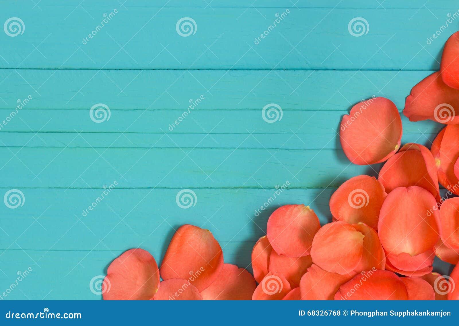 Der Abschluss oben von Blumenblättern der frischen Rosen auf Purpleheart, selektiver Fokus
