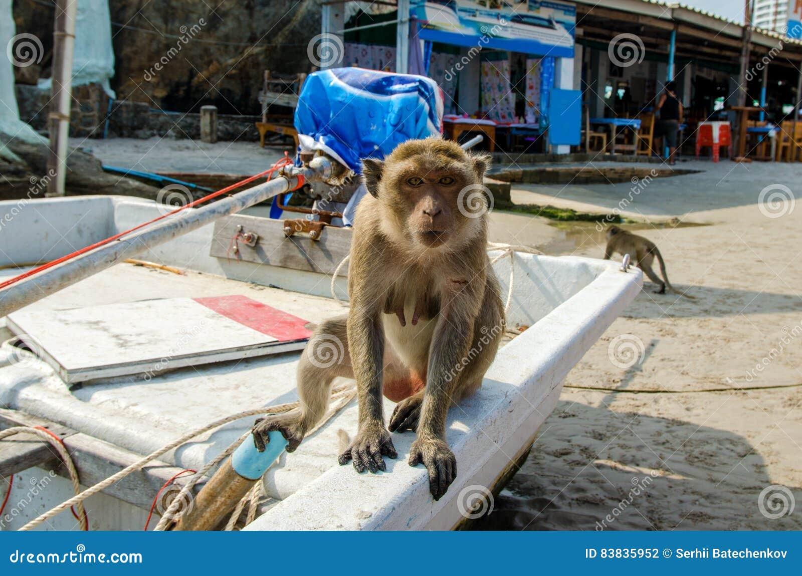 Der Affe, der im Boot auf dem Strand auf dem Hintergrund des Cafés sitzt