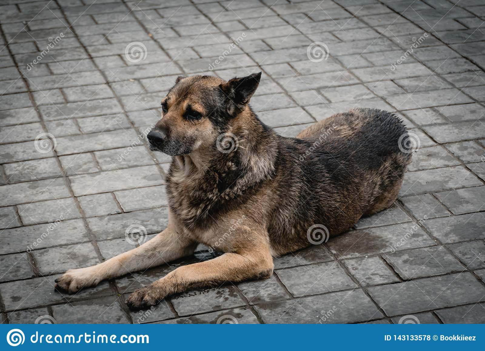 Der arme nass Hund, der in den Boden legt