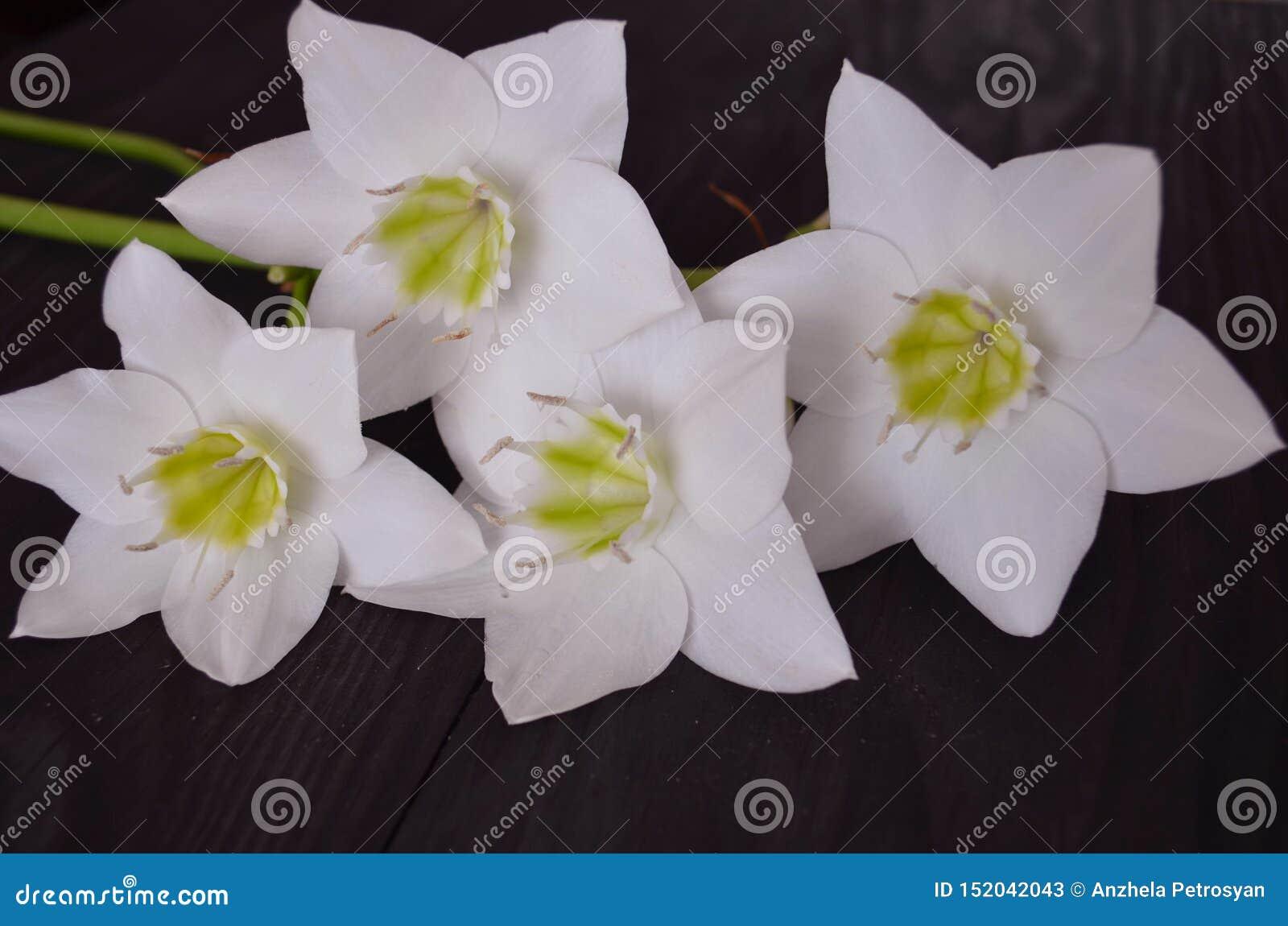 Der Aufbau der Blumen