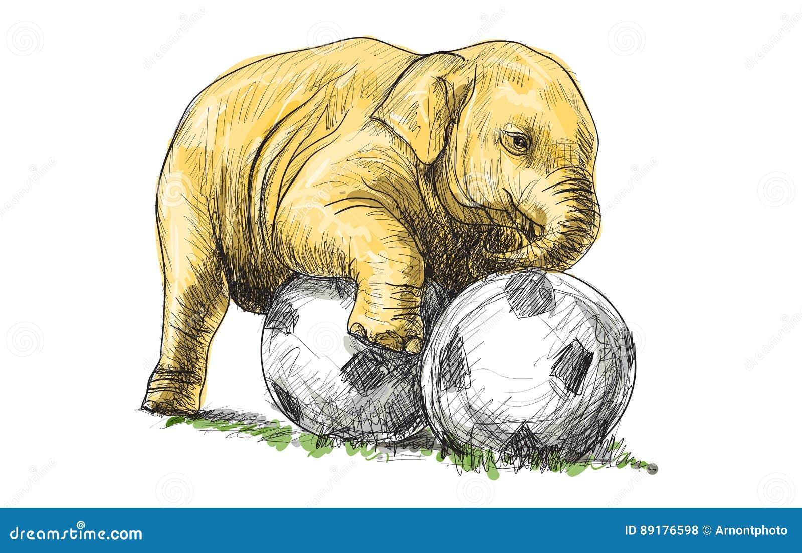 Der Babyelefant Der Fussball Spielen Die Skizze Und Die