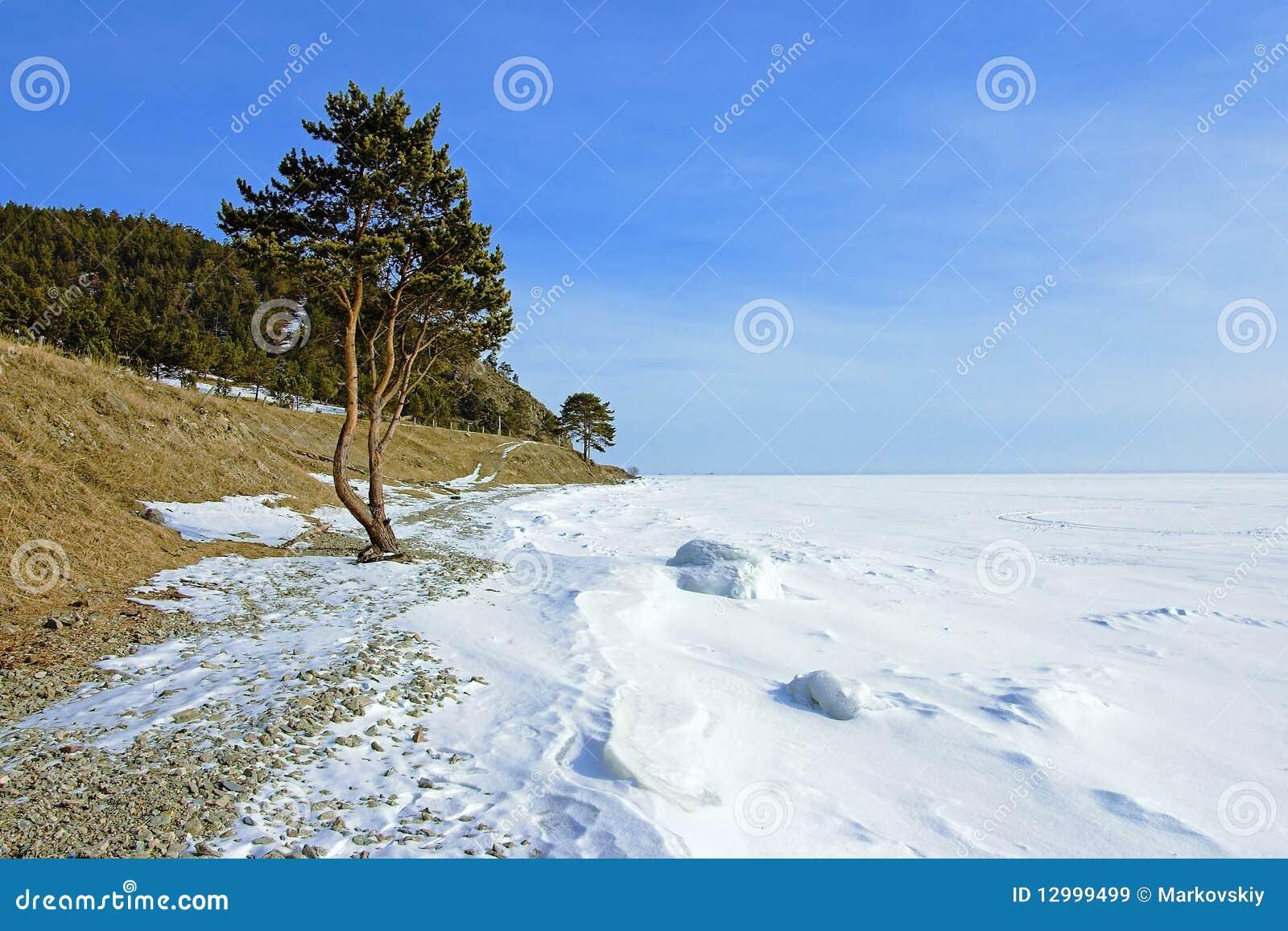 Der Baum auf dem Ufer von gefrorenem See Baikal