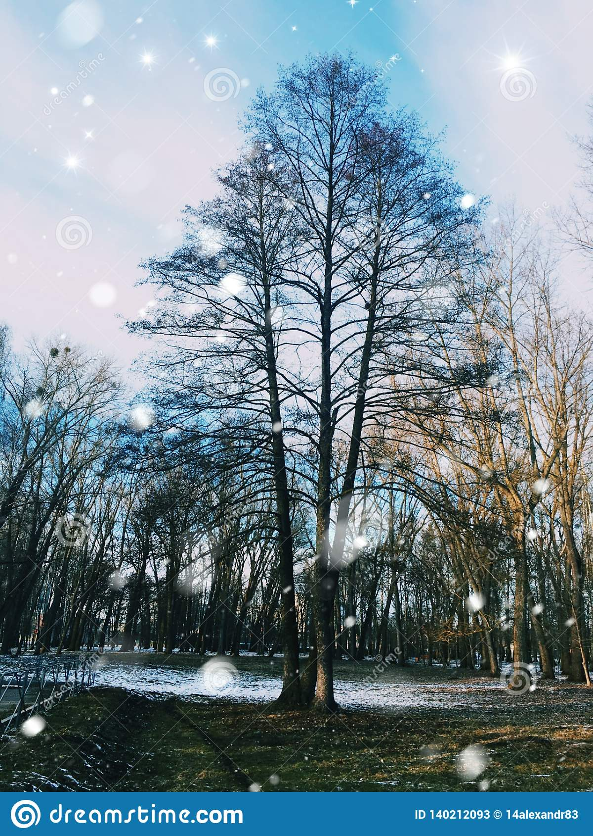 Der Baum steht im Wald allein