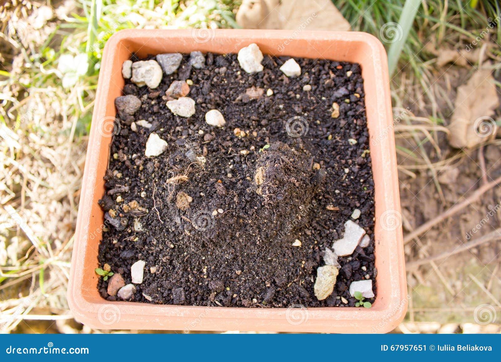 Der Boden Im Topf Fur Das Pflanzen Stockbild Bild Von