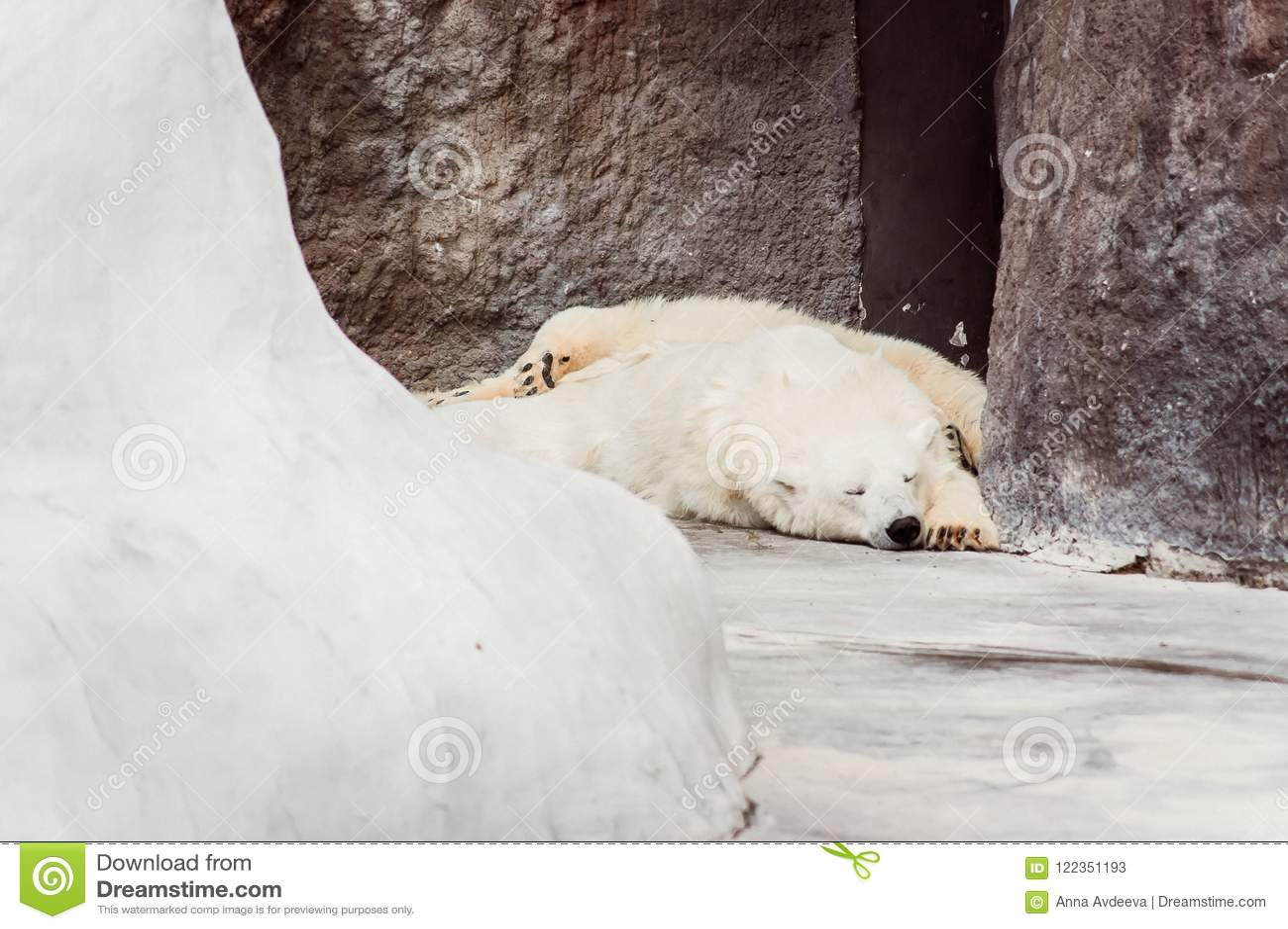 Der Eisbär schläft