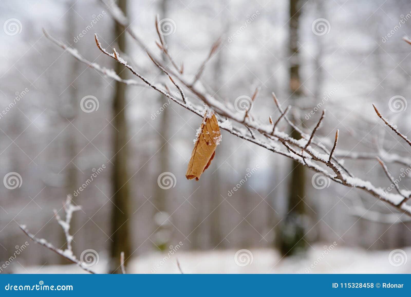 Der erste Schnee hat die verlorenen Blätter von Buchenbäumen bedeckt Buchenwald