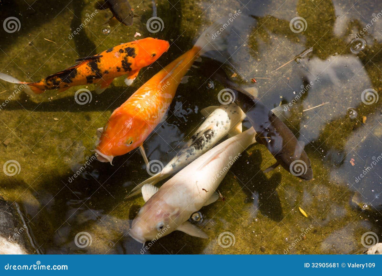 Der exotische garten von monaco fische stockbild bild for Garten fische