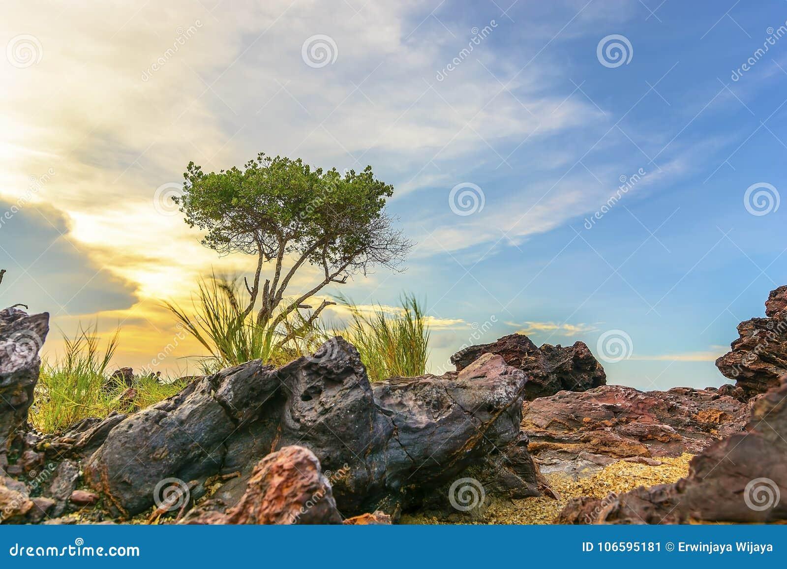 Der Felsen und einsame die Baum Bangka-Insel Indonesien