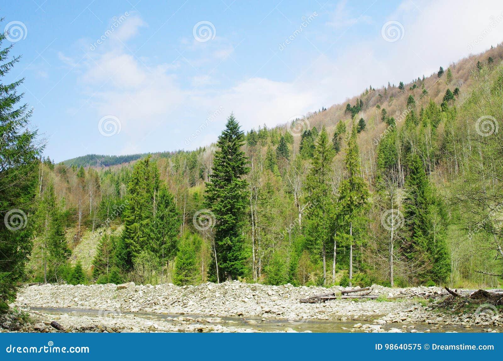 Der Fluss im Wald