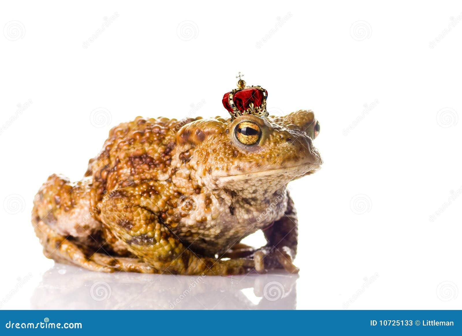 Der Frosch-Prinz