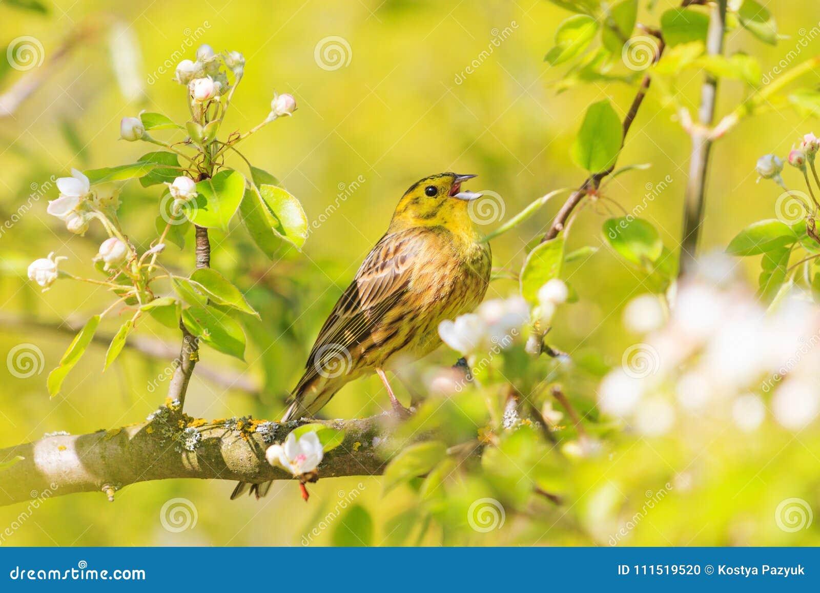 Groß Gelbe Böse Vogel Färbung Seite Bilder - Framing Malvorlagen ...