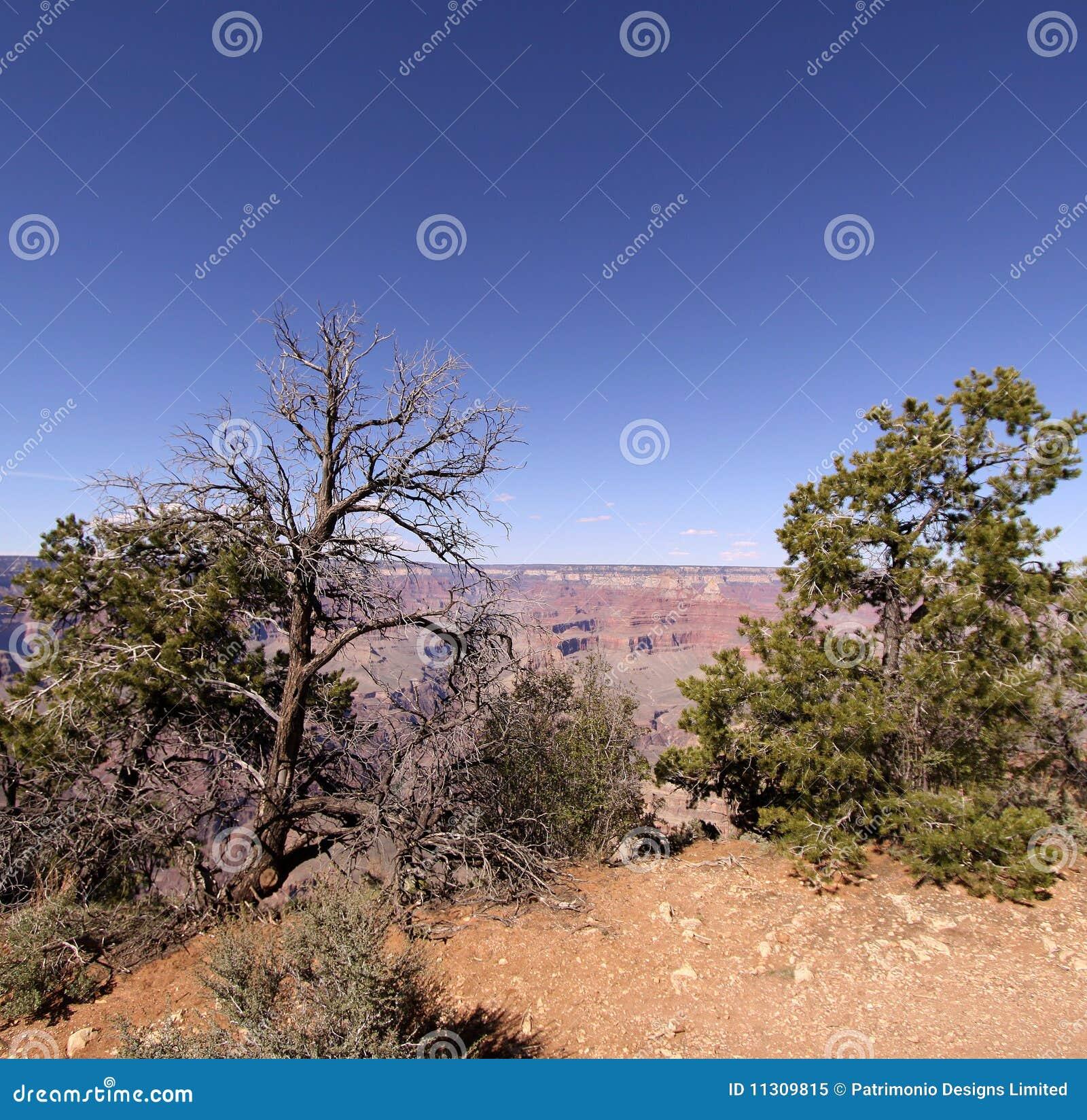 Der Grand Canyon in Arizona