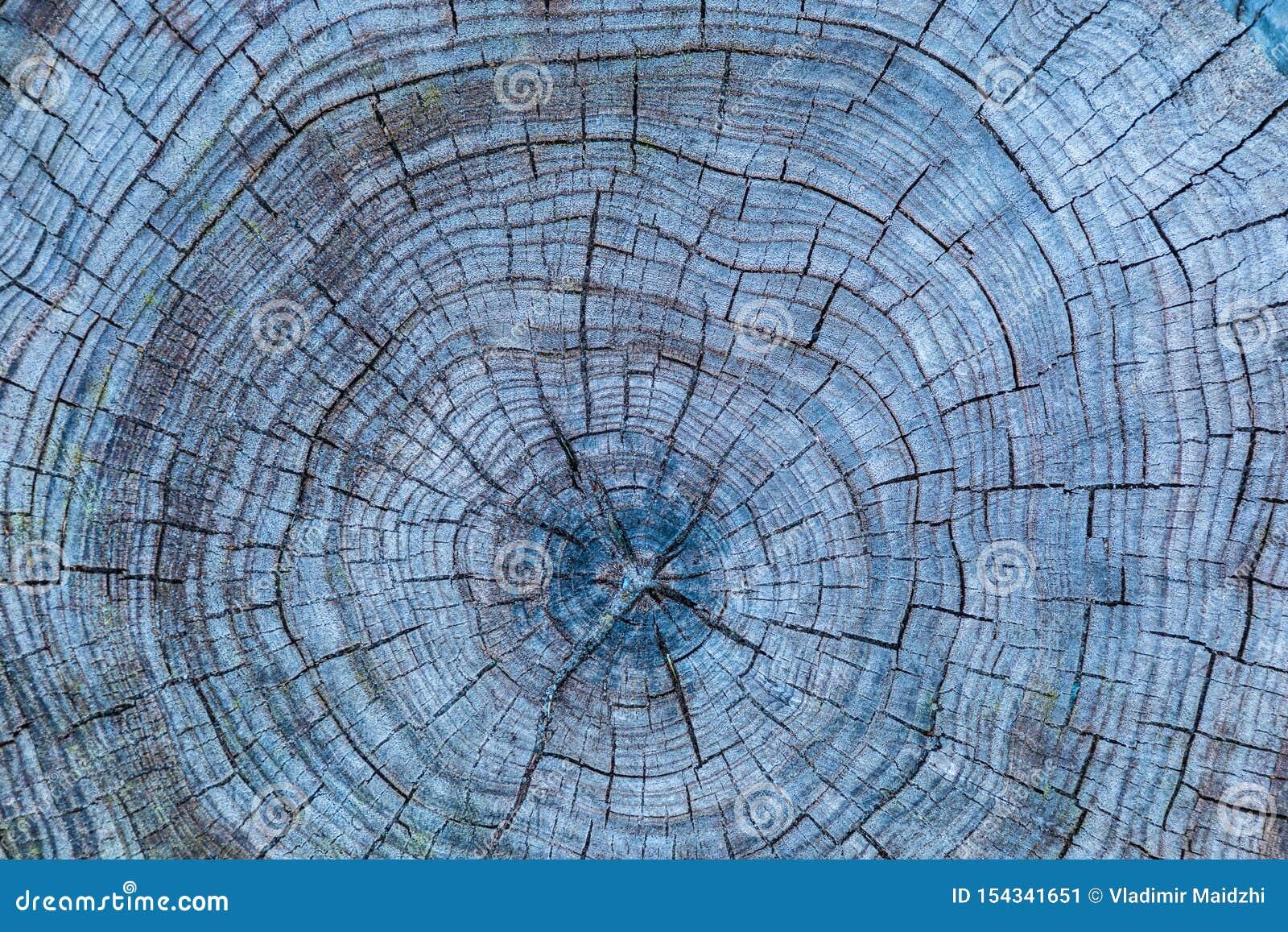 Der graue Holz- oder Bauholzhintergrund oder Beschaffenheit des cutted weg alten faulen Baums