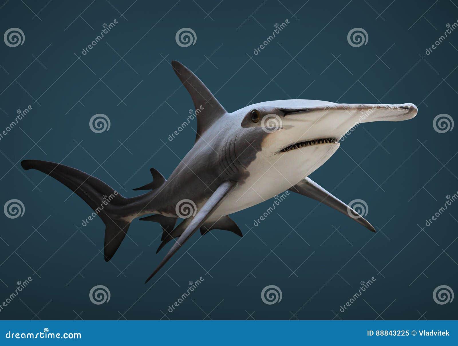 Der große Hammerhai-Haifisch