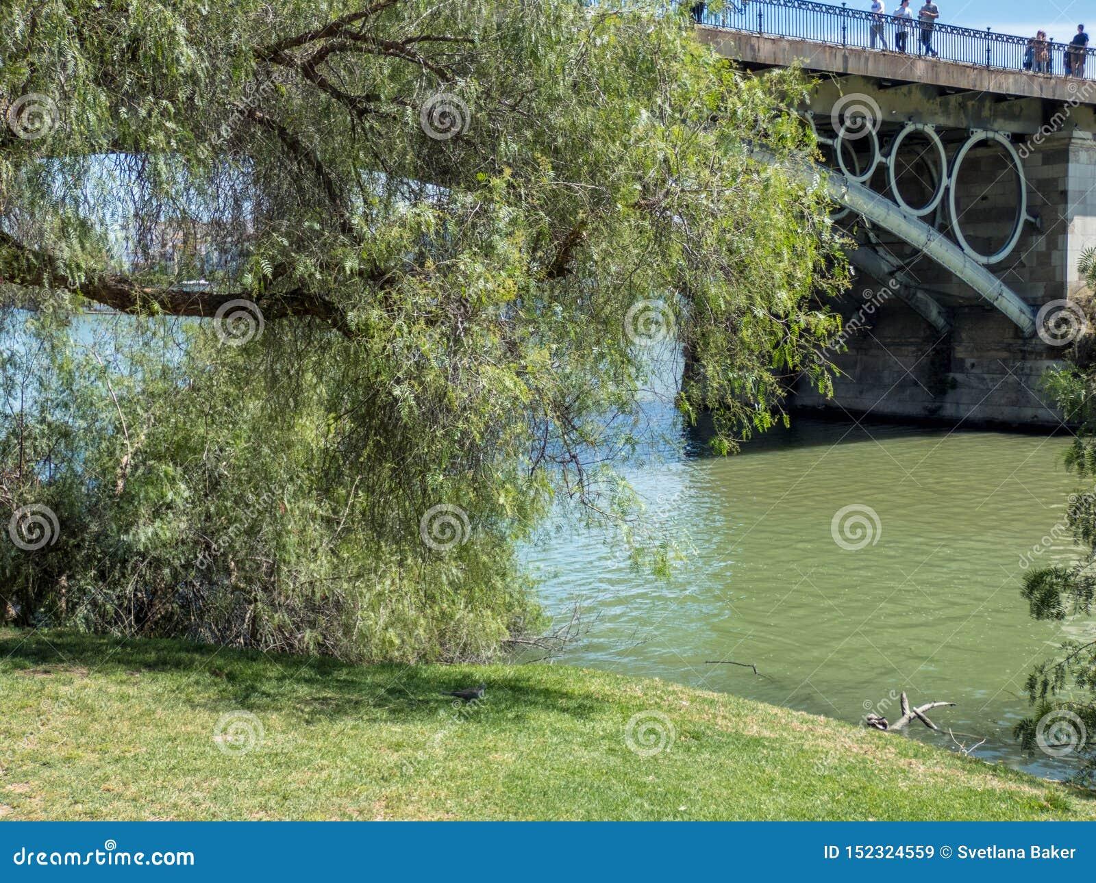 Der Guadalquivir-Fluss, der Sevilla im Süd-Spanien durchfließt Flussbank mit Baum