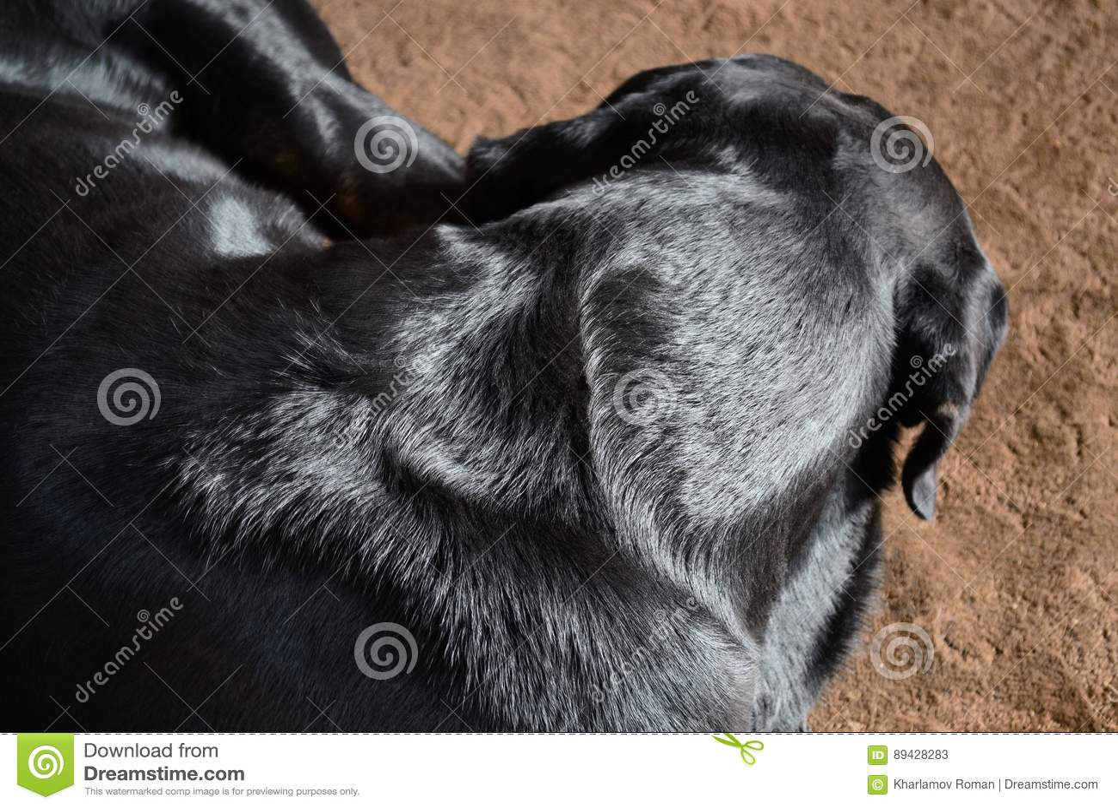 Der Hund schläft auf der Wolldecke