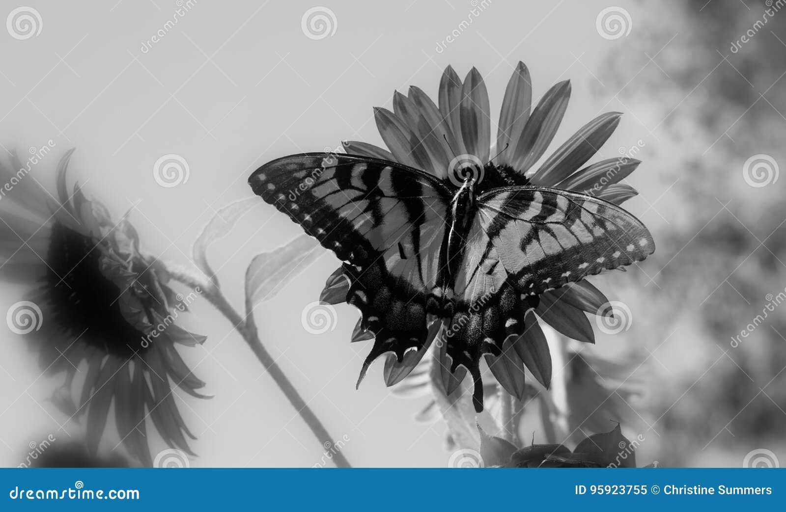 Der hungrige Schmetterling