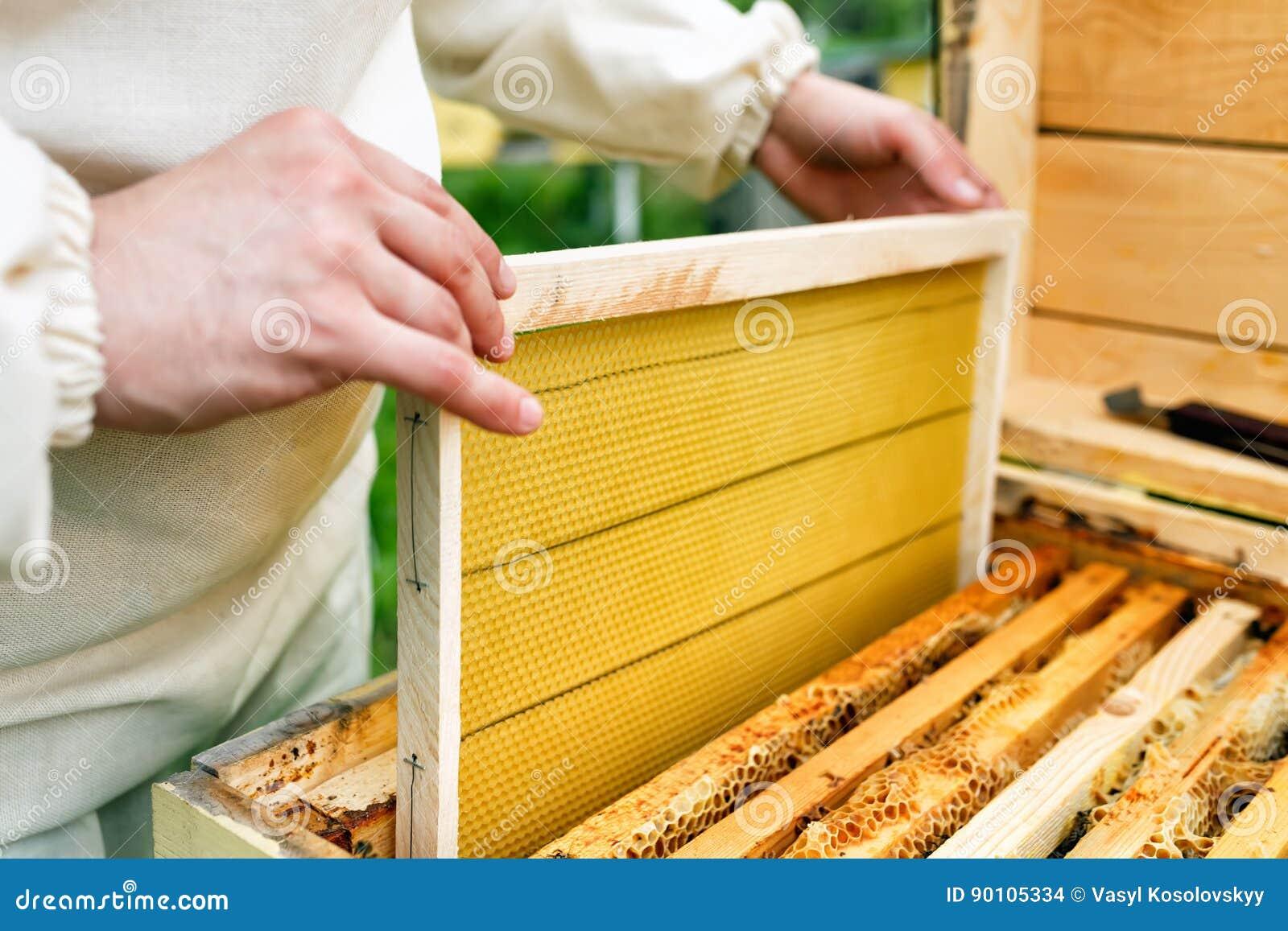 Der Imker Setzt Den Bienenstock Ein Neuer Rahmen Für Honig ...