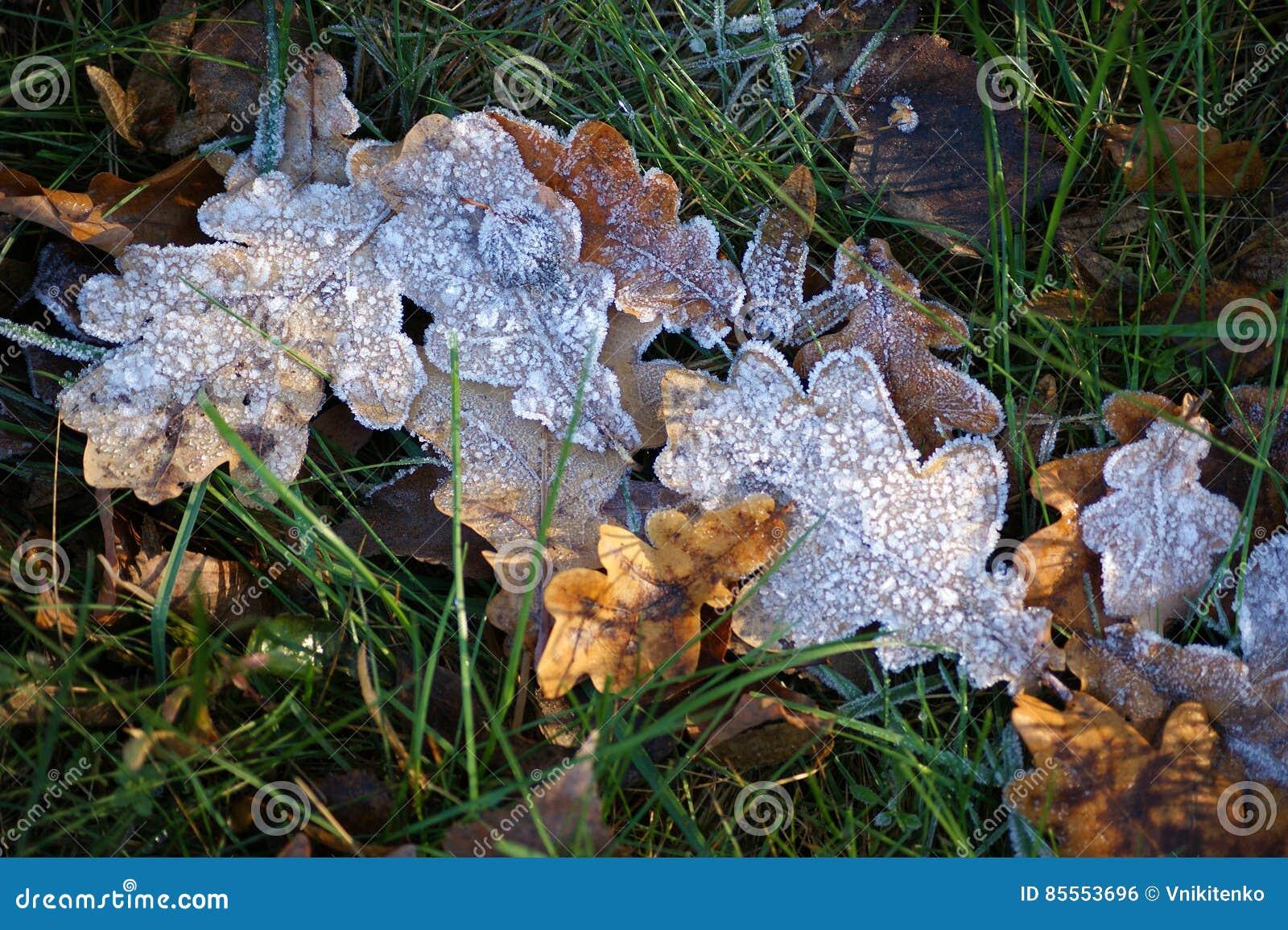 Der Kristallfrost auf den trockenen Blättern