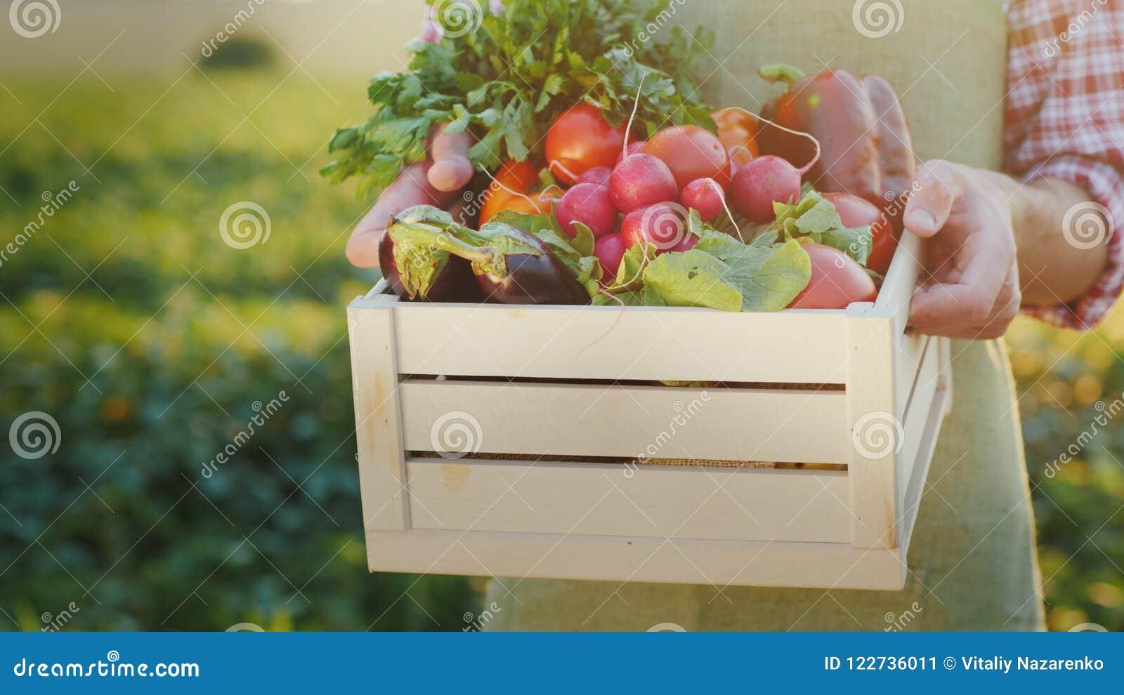 Der Landwirt hält eine Holzkiste mit Frischgemüse Organisches Landwirtschaftskonzept
