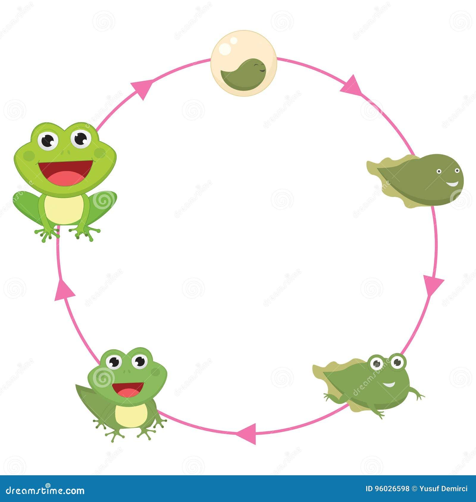 Der Lebenszyklus Der Frosch-Vektor-Illustration Vektor Abbildung ...