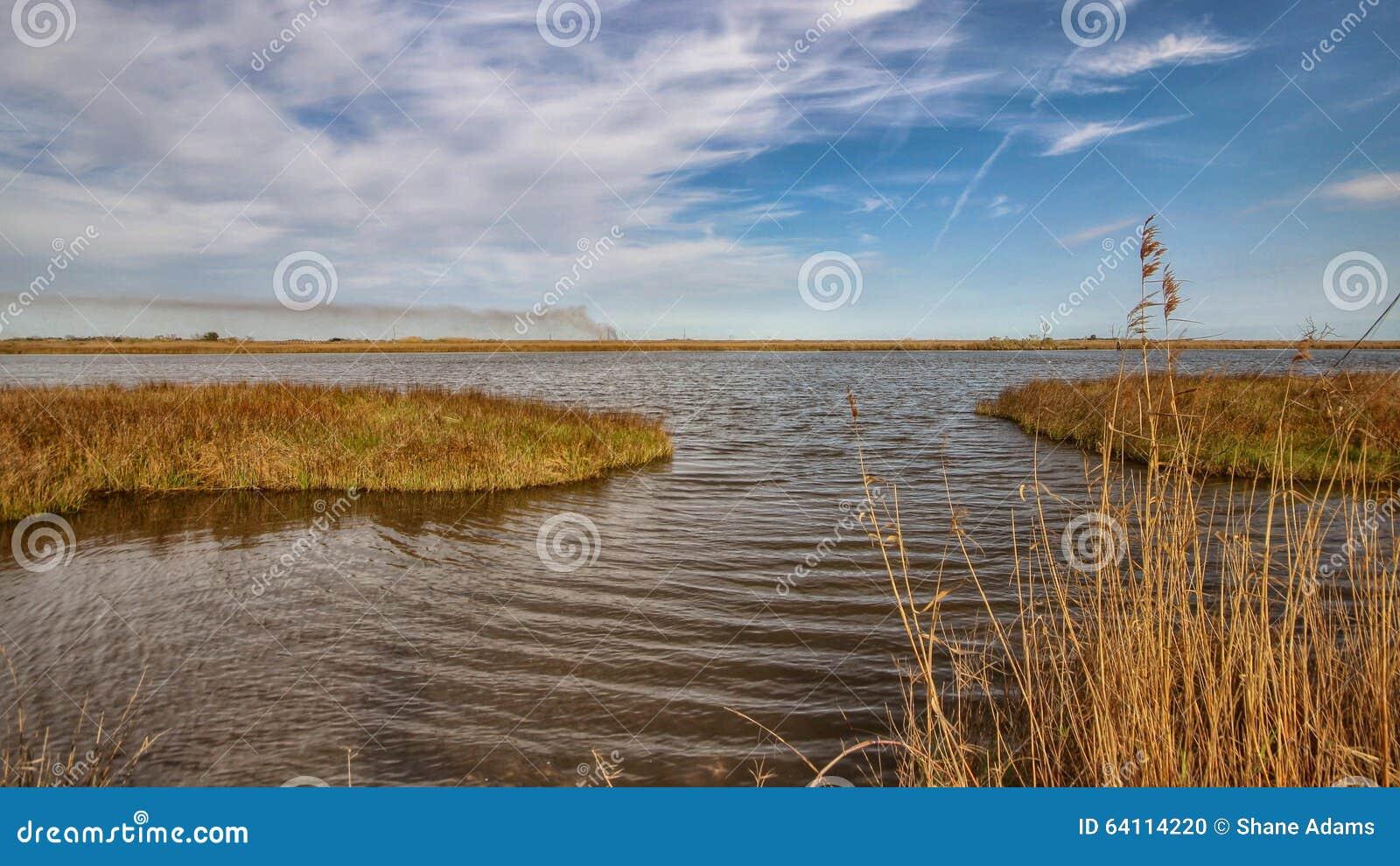 Der Louisiana-Sumpf