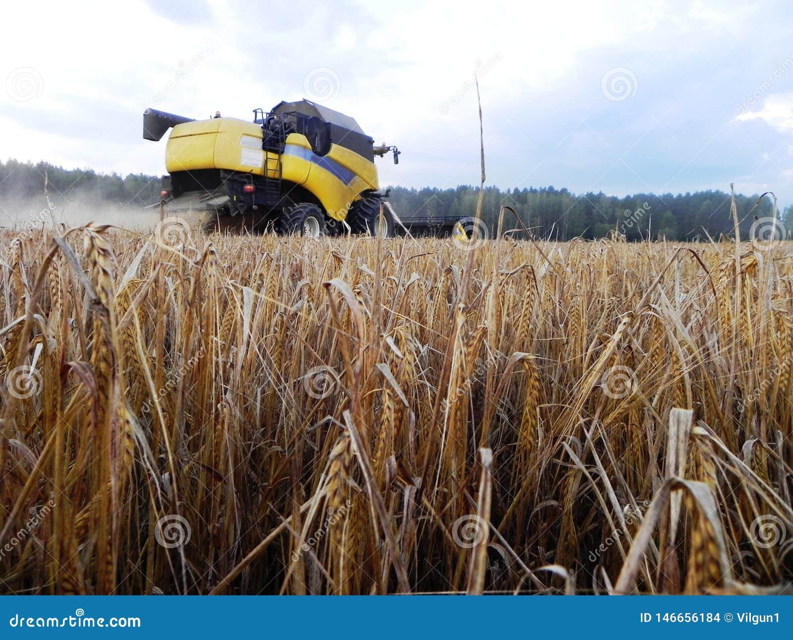 Der M?hdrescher m?ht Gras auf dem Sommergebiet Ernten nach der Sommersaison Details und Nahaufnahme
