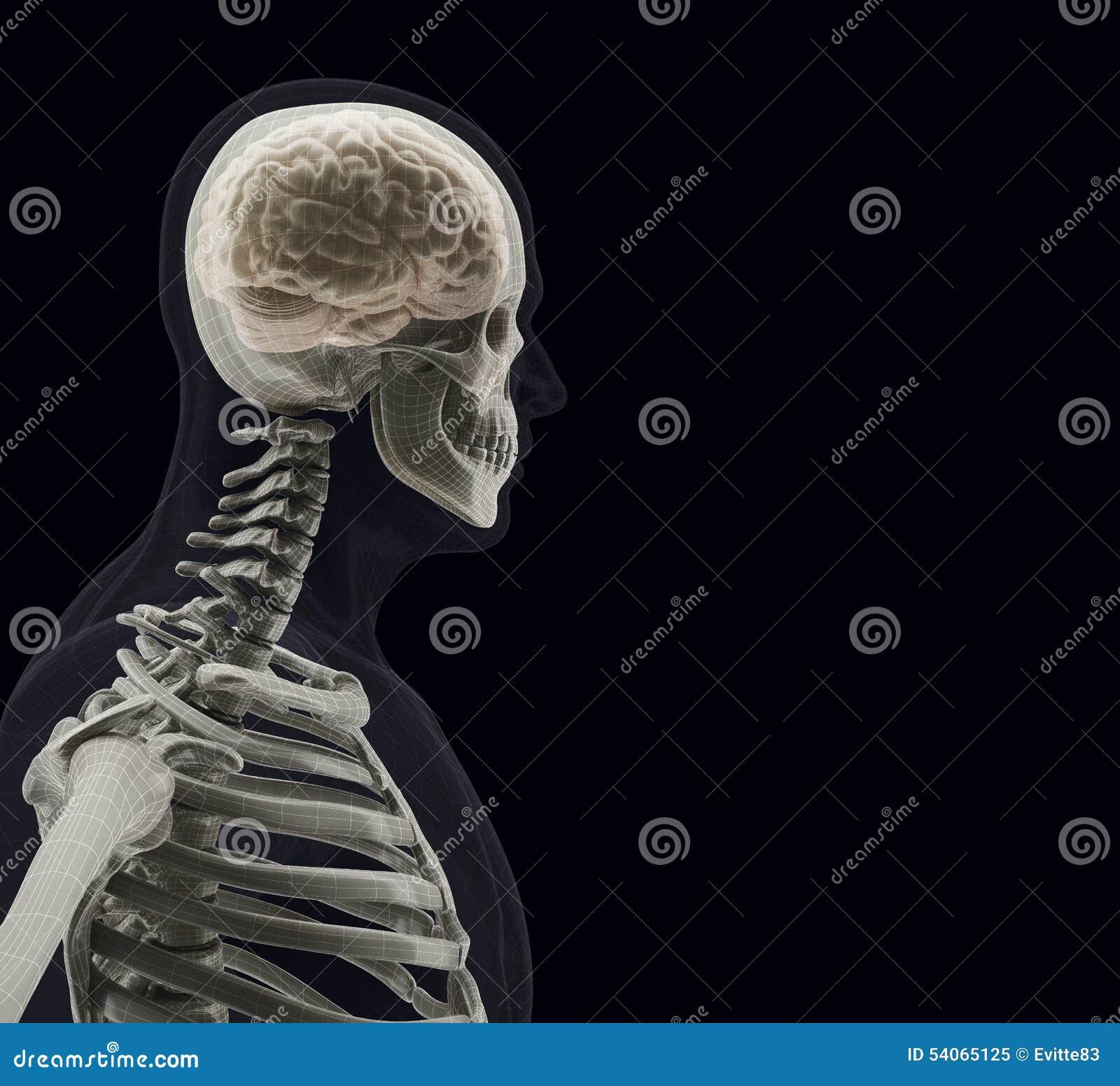 Der menschliche Körper (Organe) durch Röntgenstrahlen auf schwarzem Hintergrund
