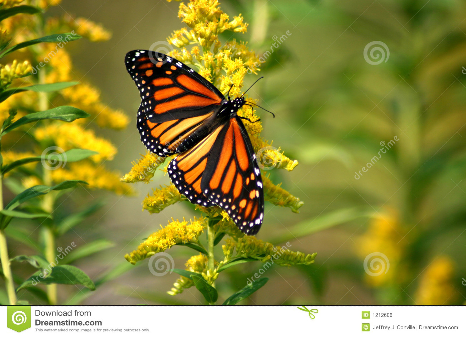 Der Monarch Leert Geldspielgeräte