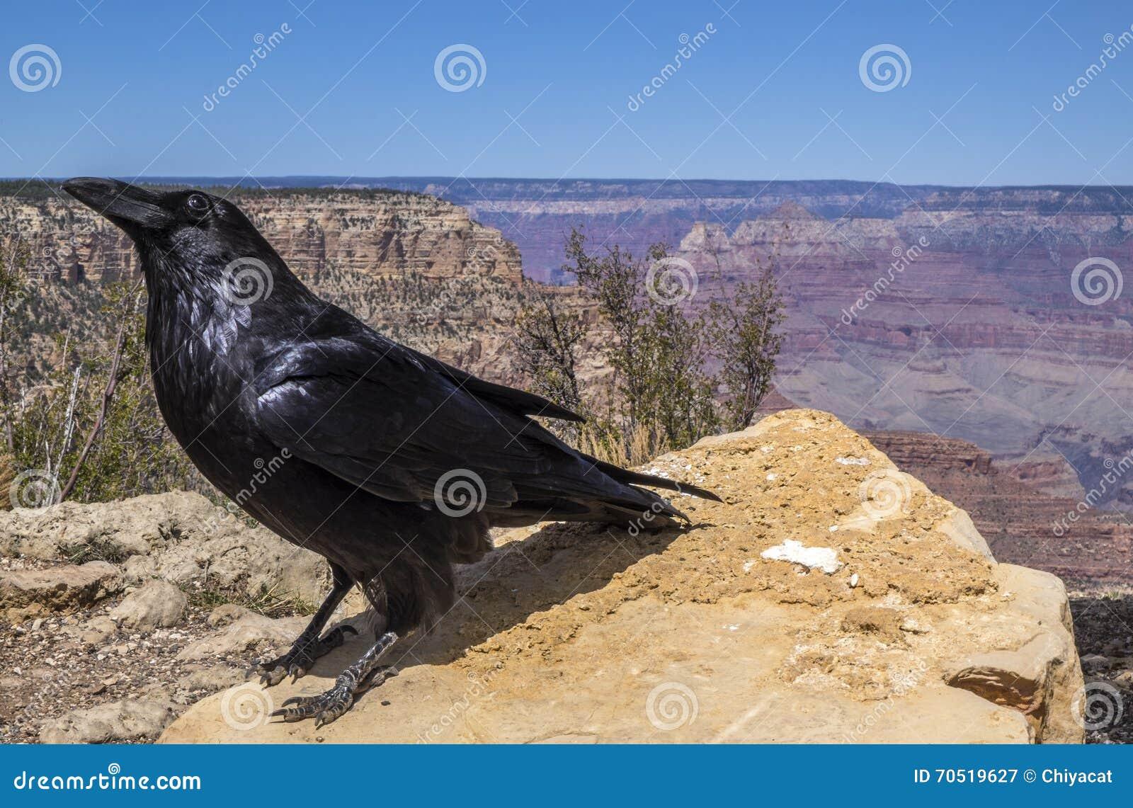 Der Nationalpark #9 Grand Canyon s