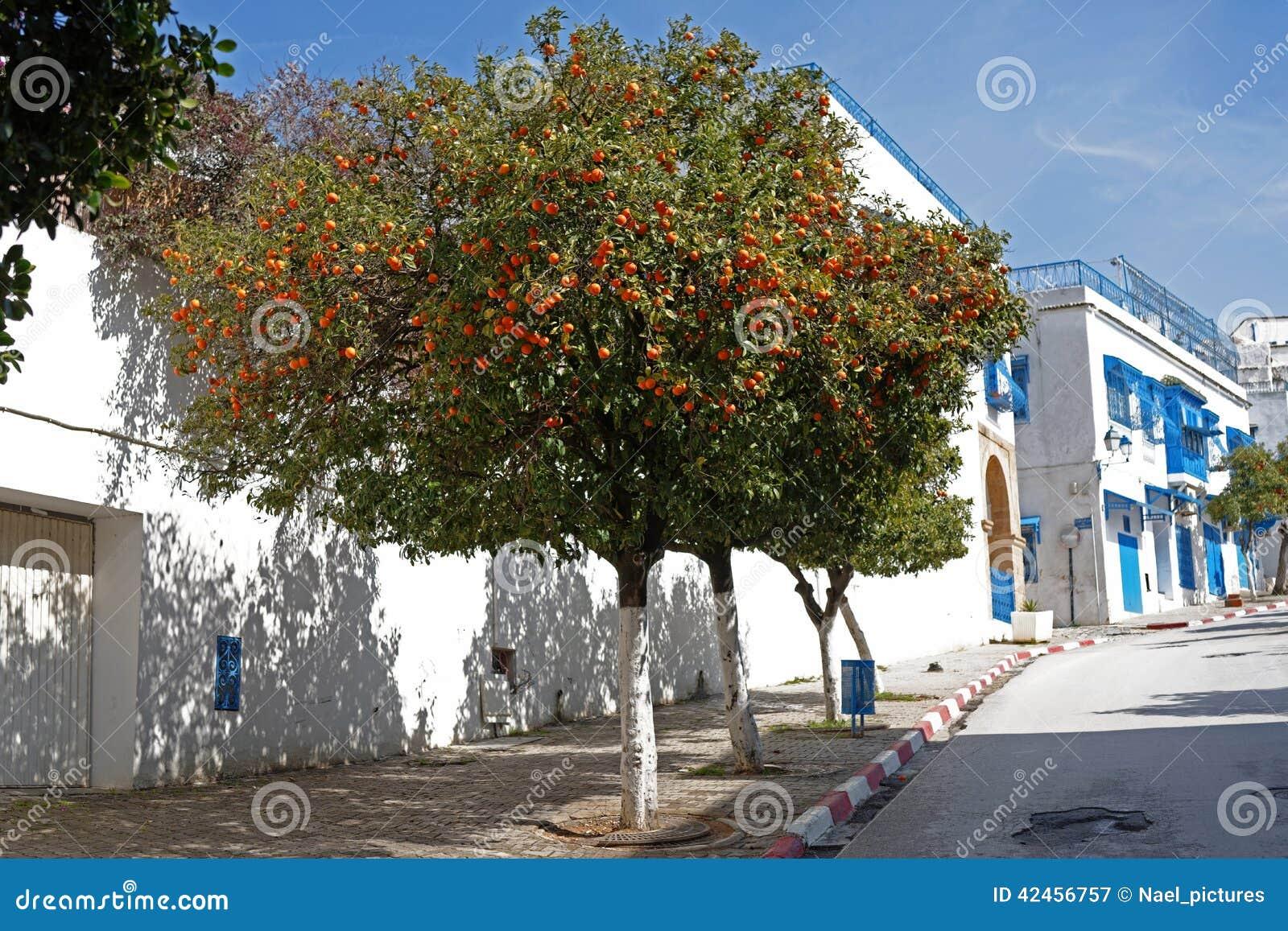 Der Orangenbaum