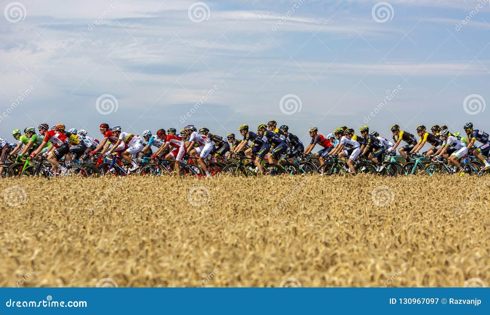 Der Peloton - Tour de France 2017