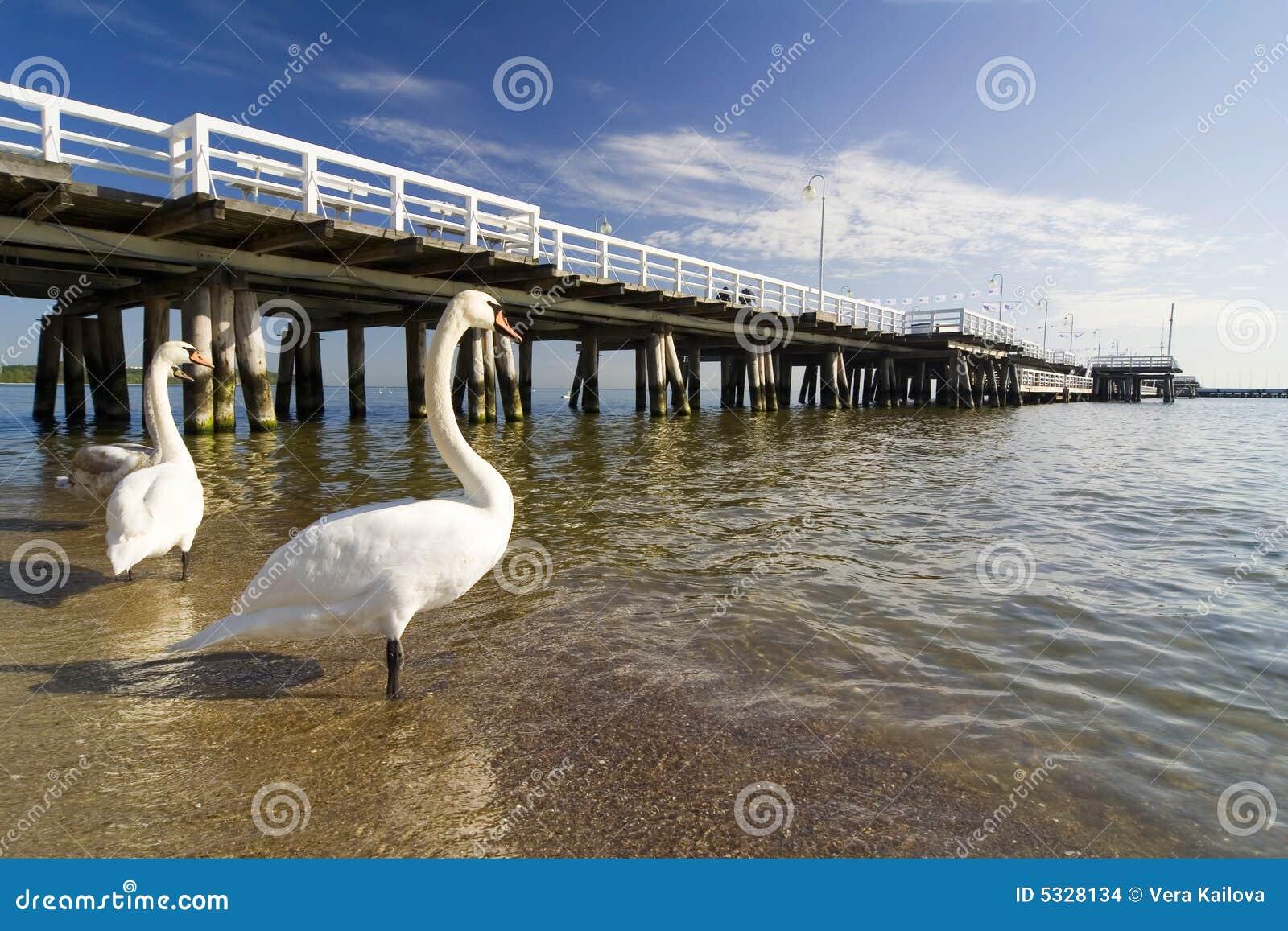 Der Pier in Sopot mit Schwan