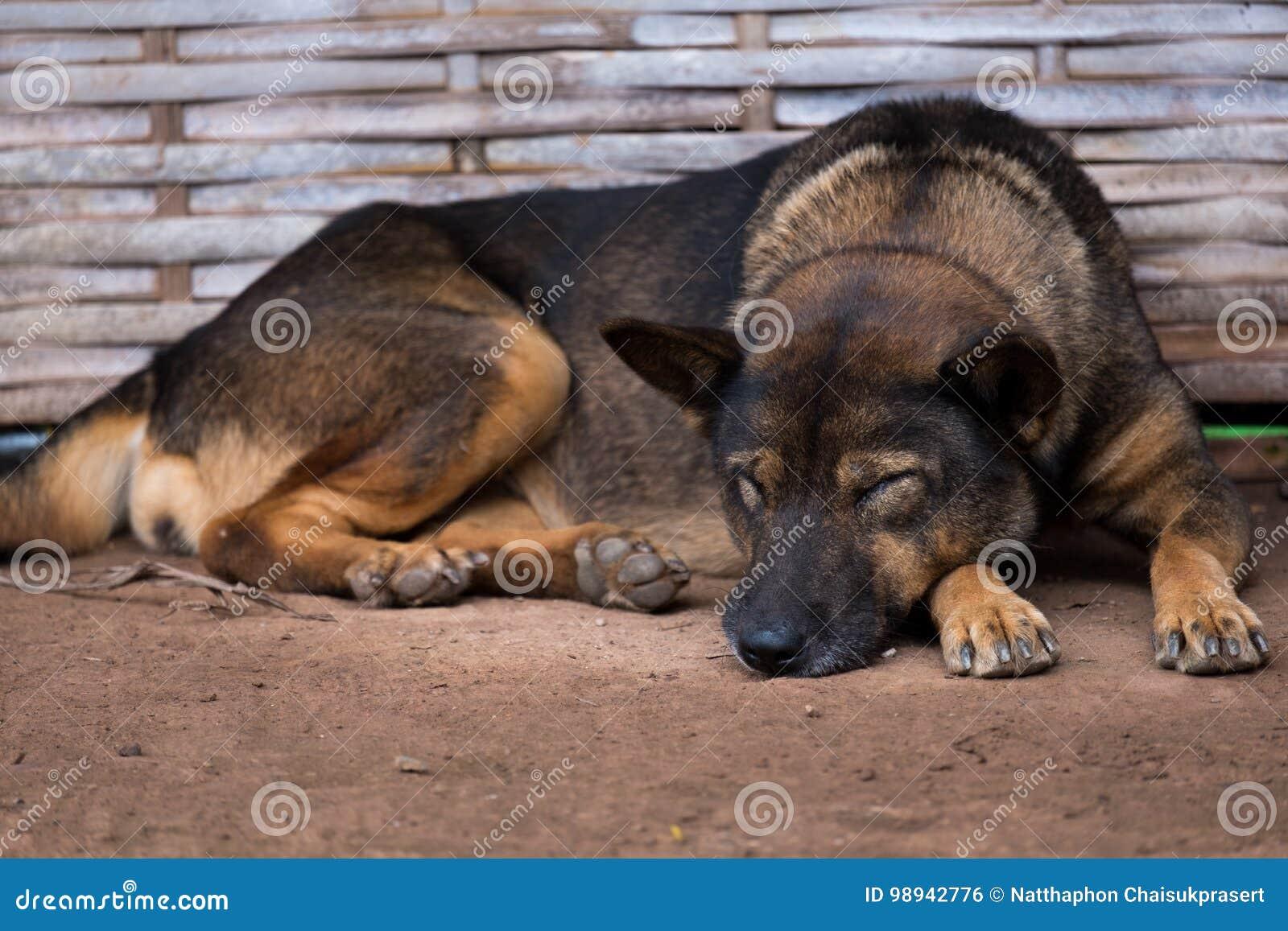 Der Schlafenhund lag auf Sand