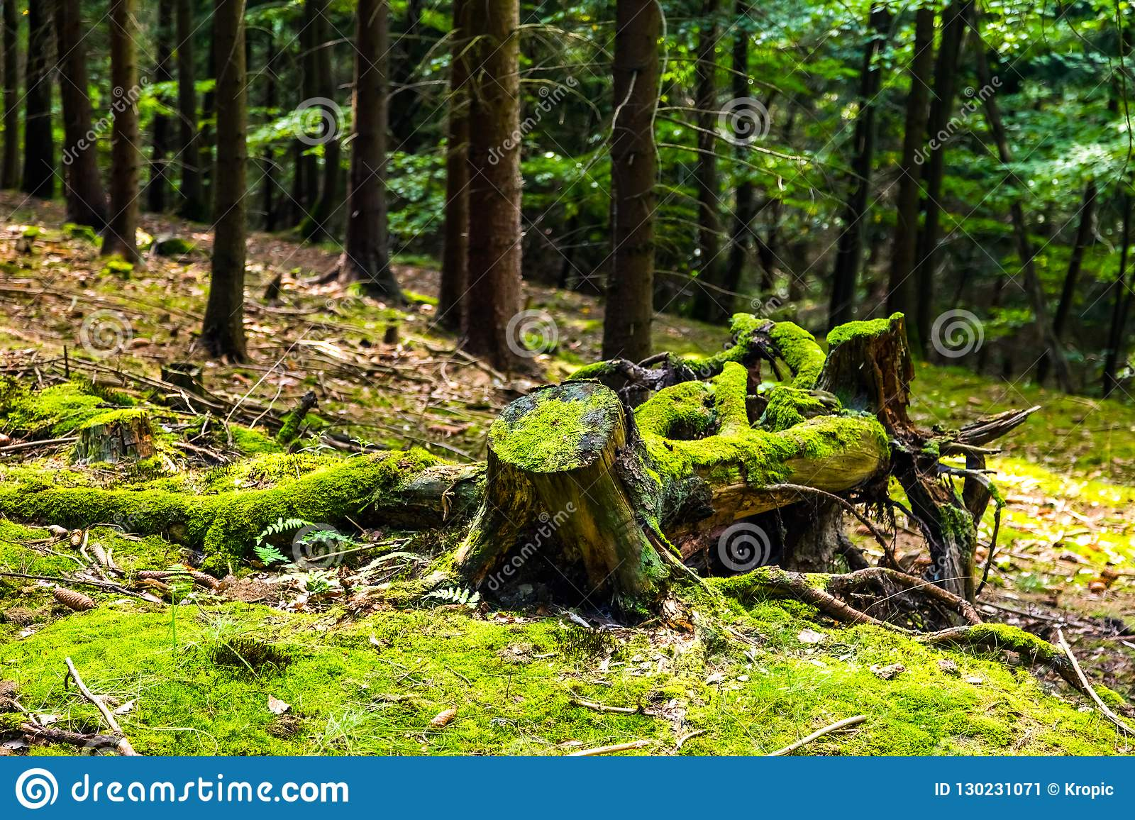 der urwald mit stumpf stockbild bild von lebensraum