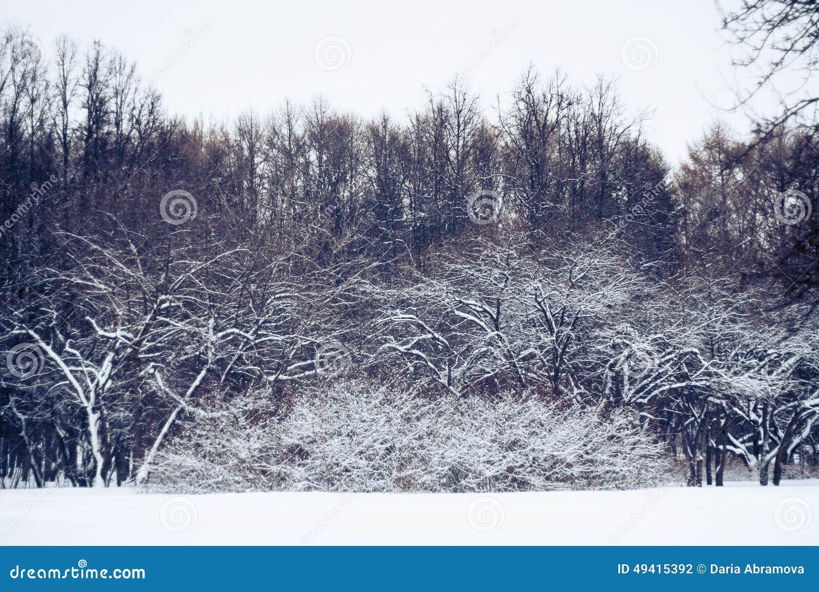 Download Der Wald stockfoto. Bild von russisch, baum, kalt, schnee - 49415392