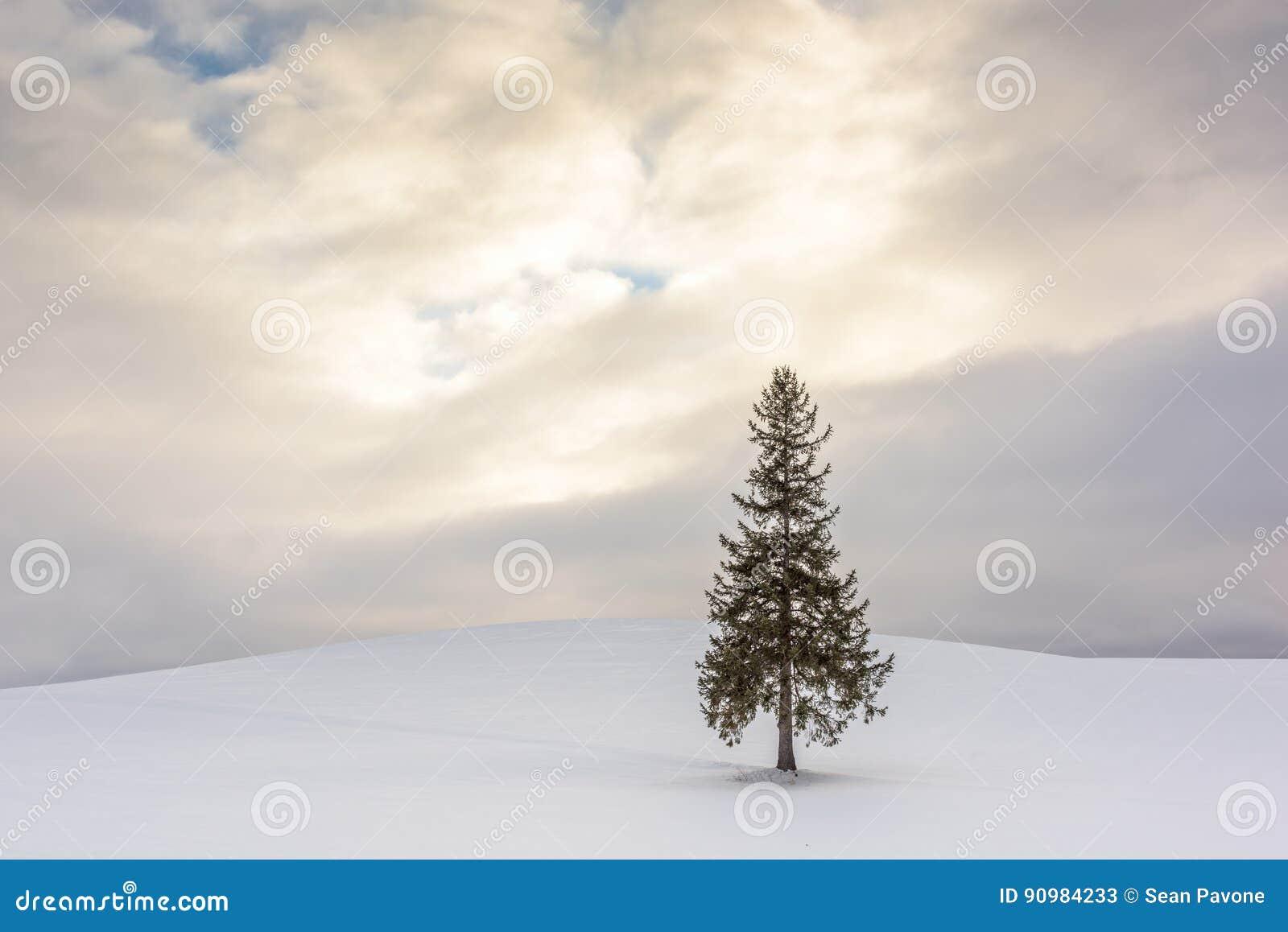 der weihnachtsbaum in bie japan stockbild  bild von