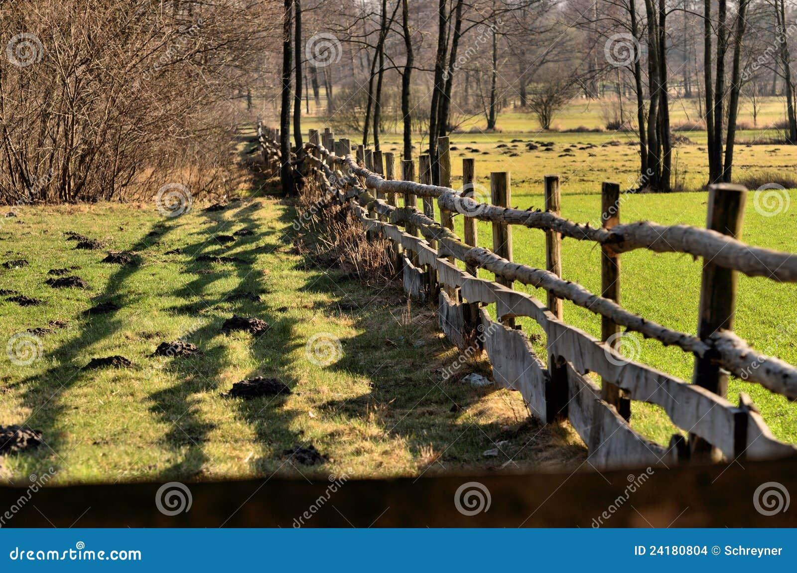 Der Zaun um Weide stockfoto Bild von pfützen himmel