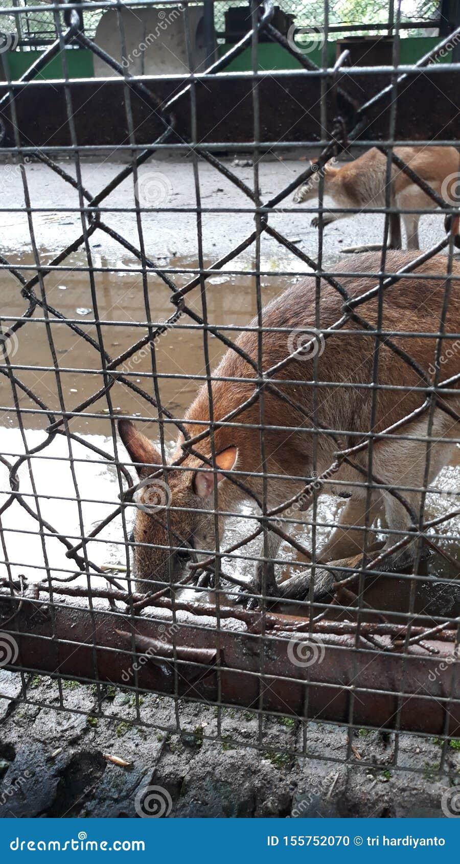 Des kangourous aiment être vus par des visiteurs de zoo