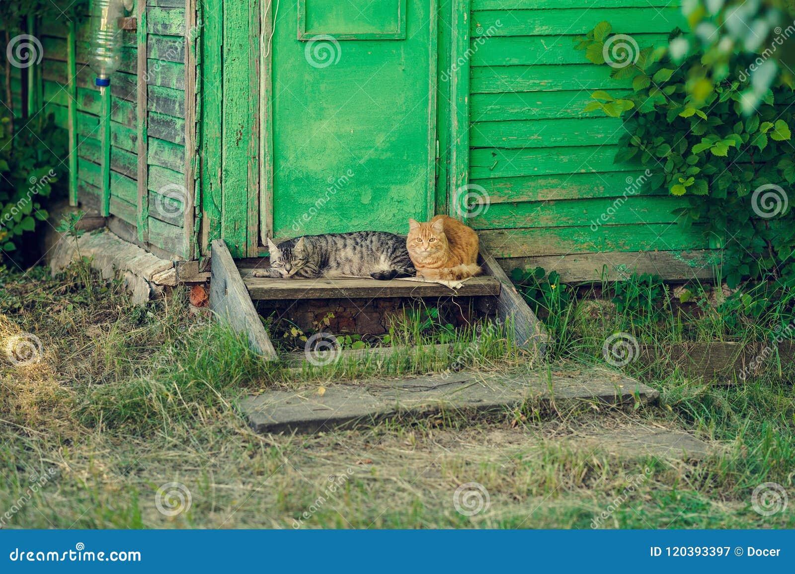 Descansar relaxa o gato de dois silêncios perto da porta verde de madeira