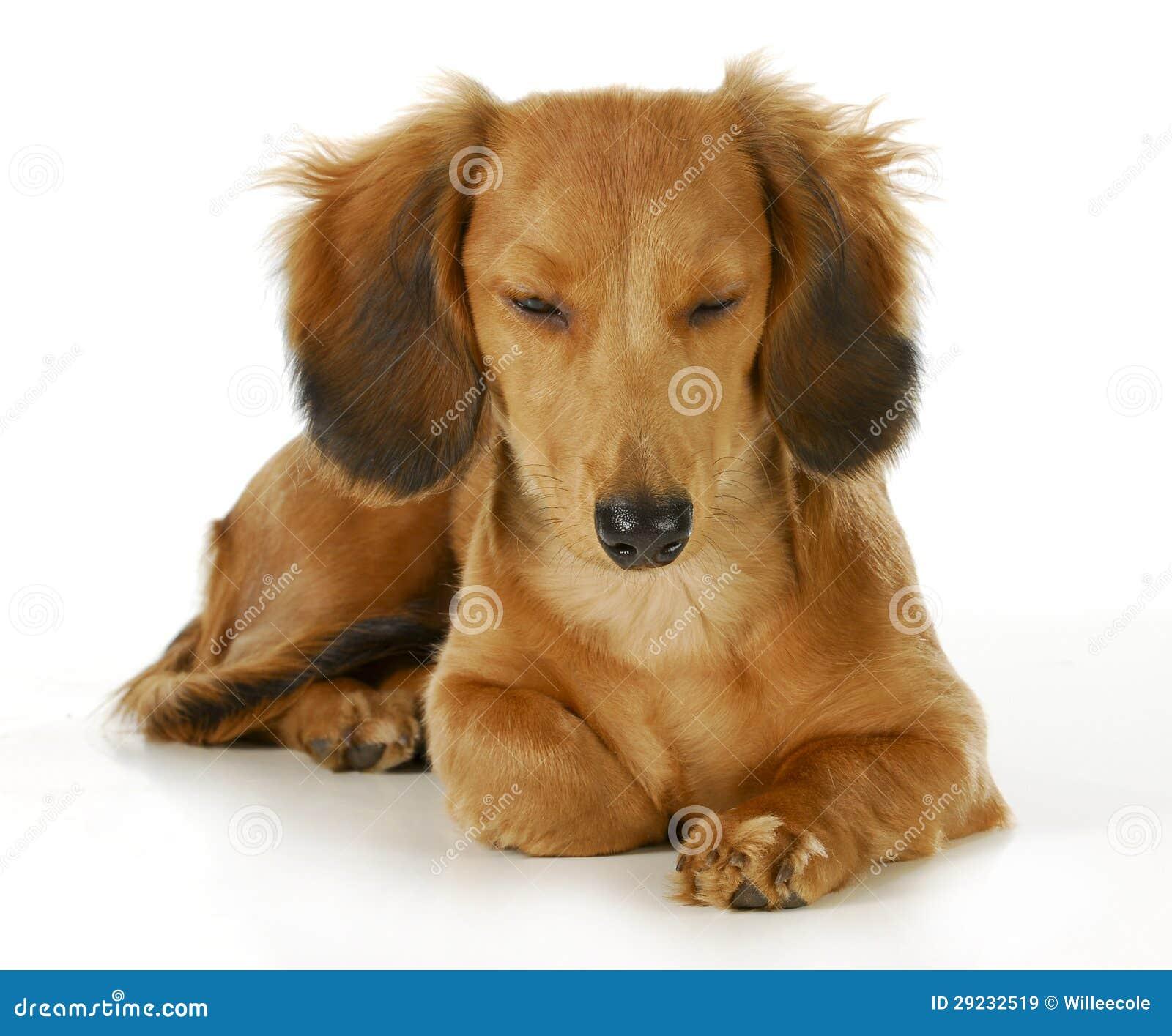 Download Descanso do cão imagem de stock. Imagem de emoção, raça - 29232519