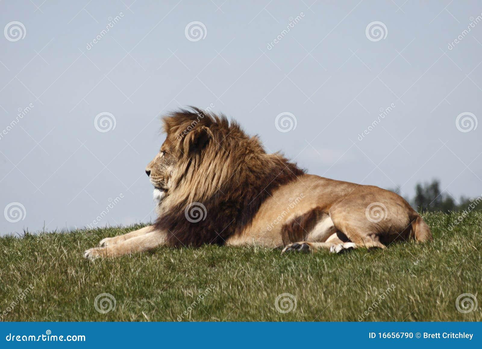 Descansos do leão