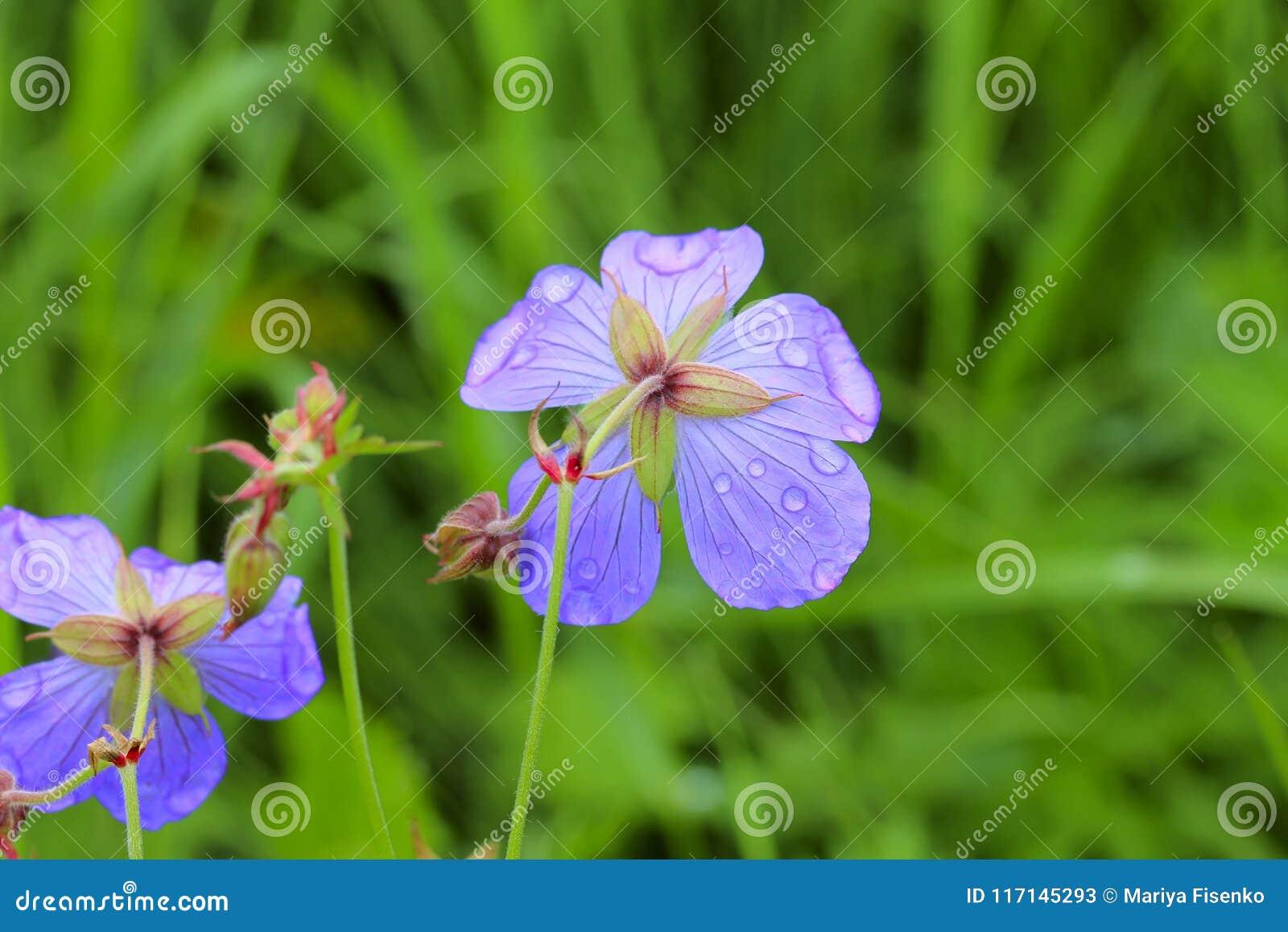 Descensos en la flor 2