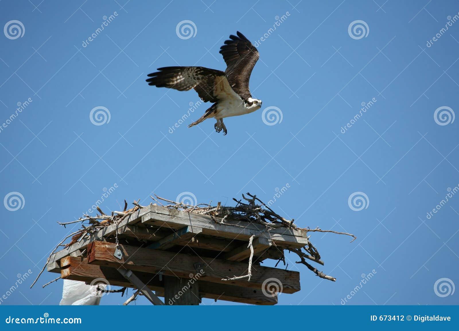 Descolagem do Osprey