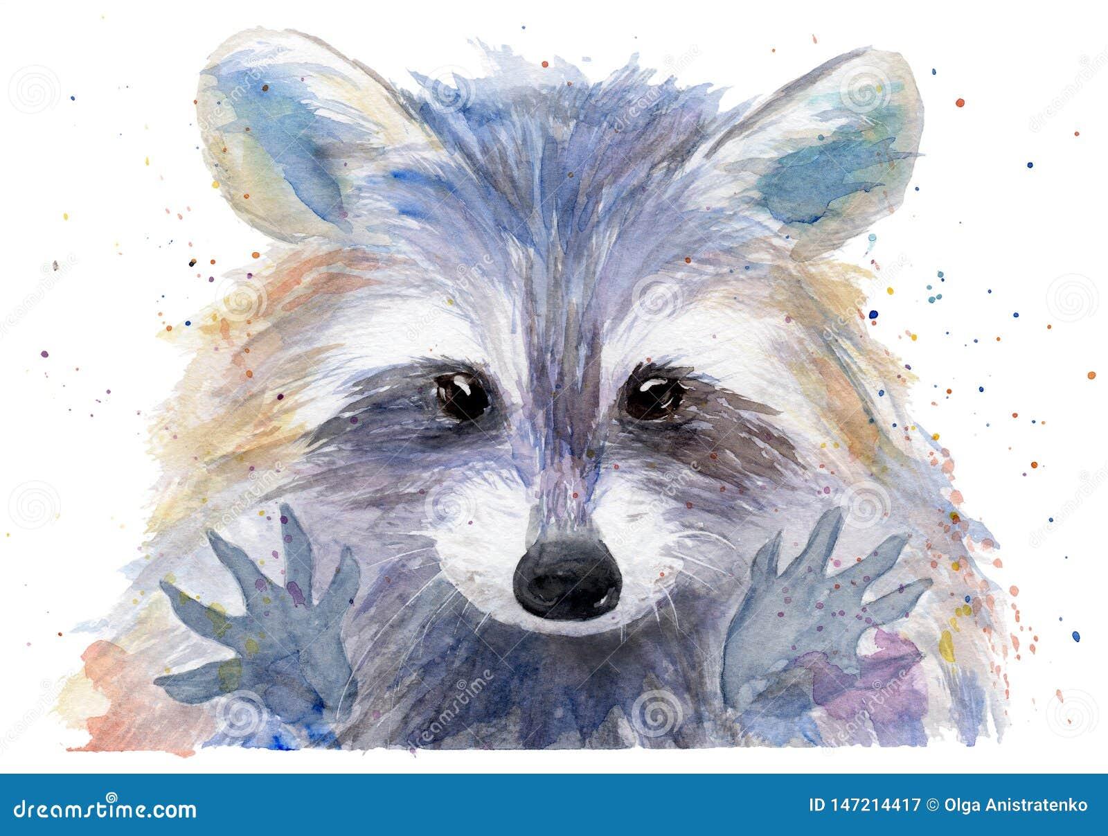 Desenho Da Aquarela De Um Animal Guaxinim Colorido Ilustracao