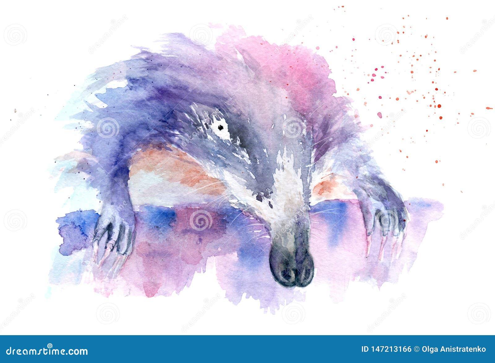 Desenho Da Aquarela De Um Animal Muskrat Musaranho Ilustracao