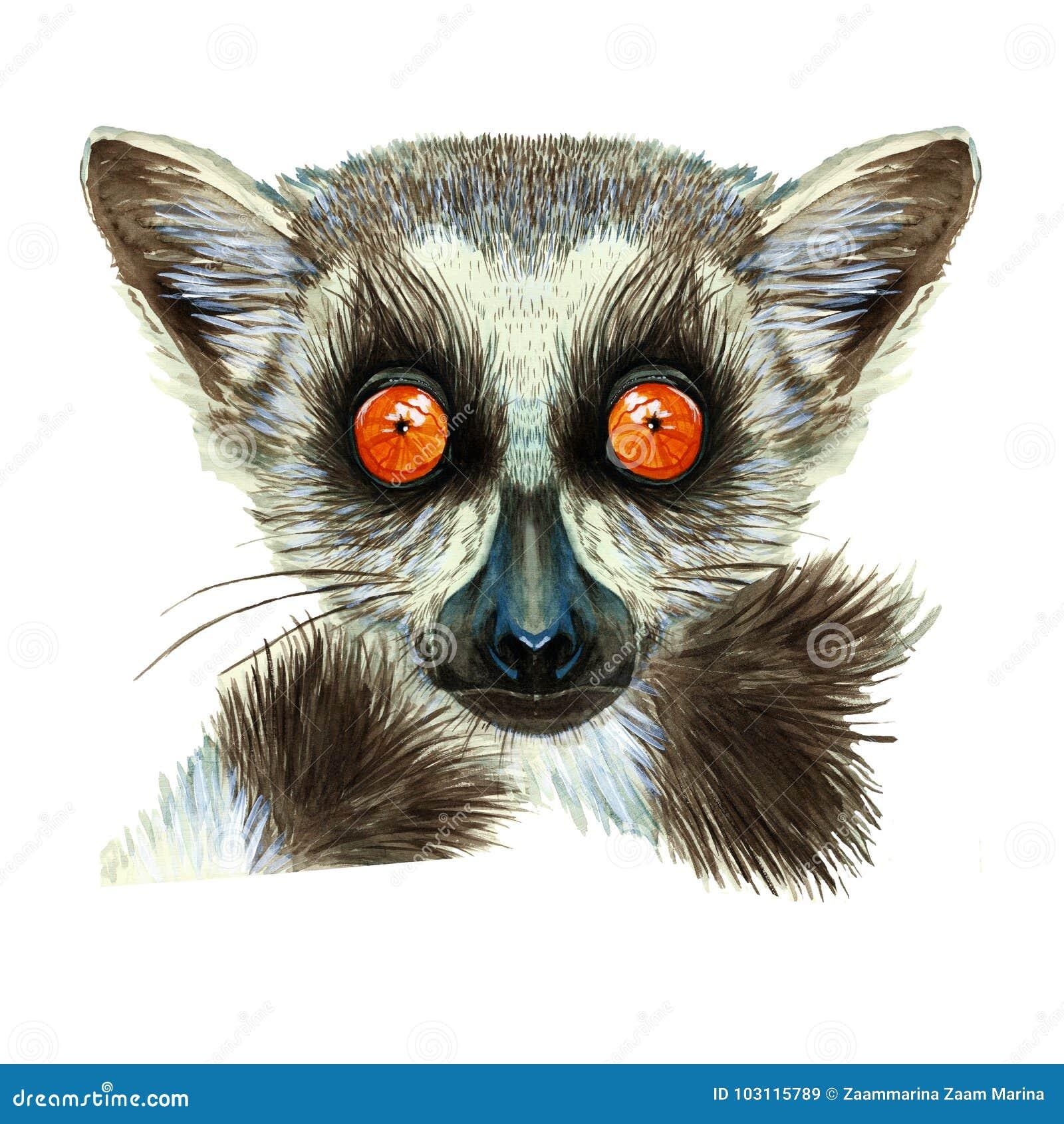 Desenho da aquarela do animal do mamífero do lêmure com os grandes olhos alaranjados com cabelo e cauda, retrato do lêmure, no fu