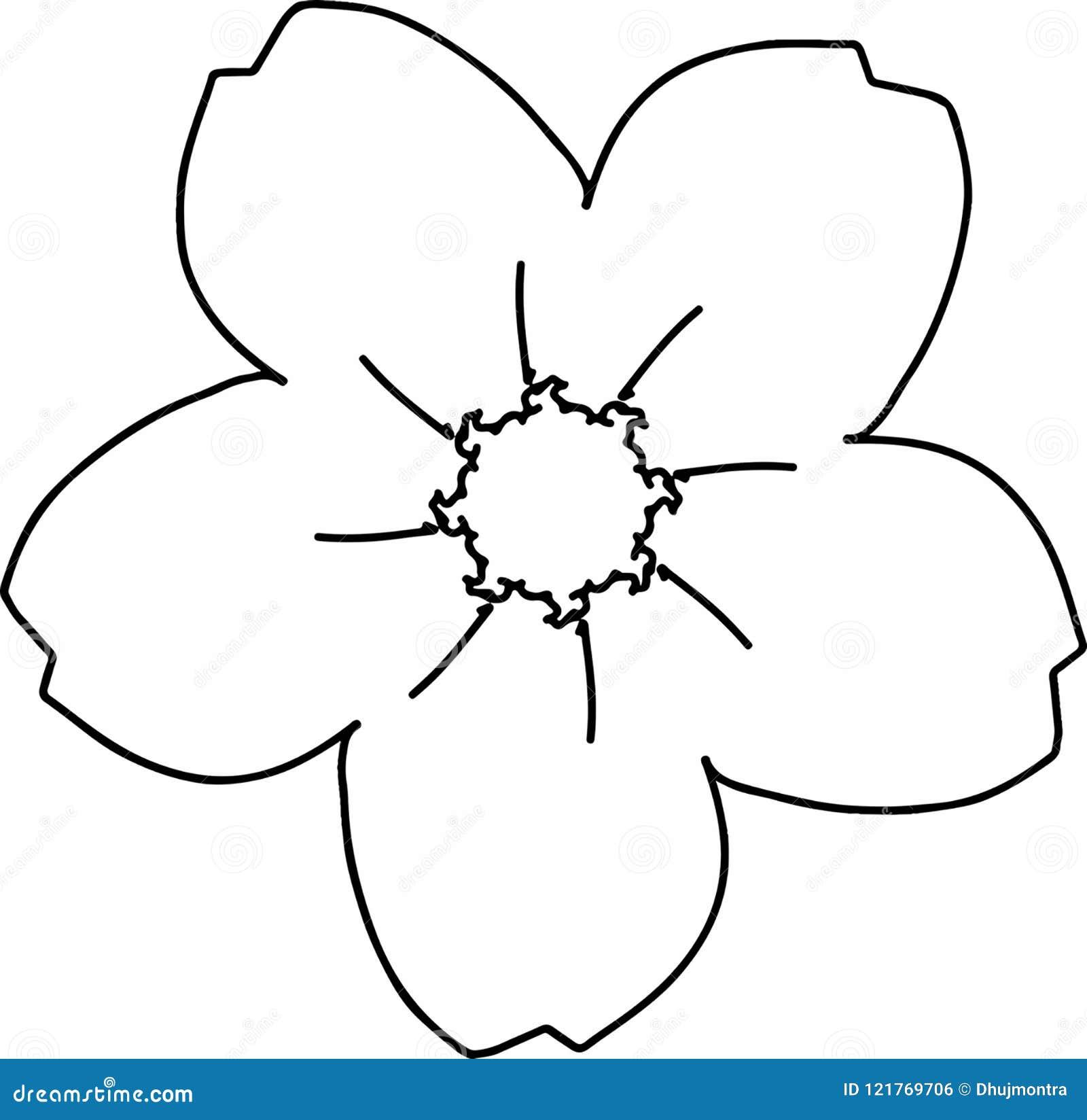 Desenho Da Flor De Cerejeira De Cinco Petalas Ilustracao Do Vetor