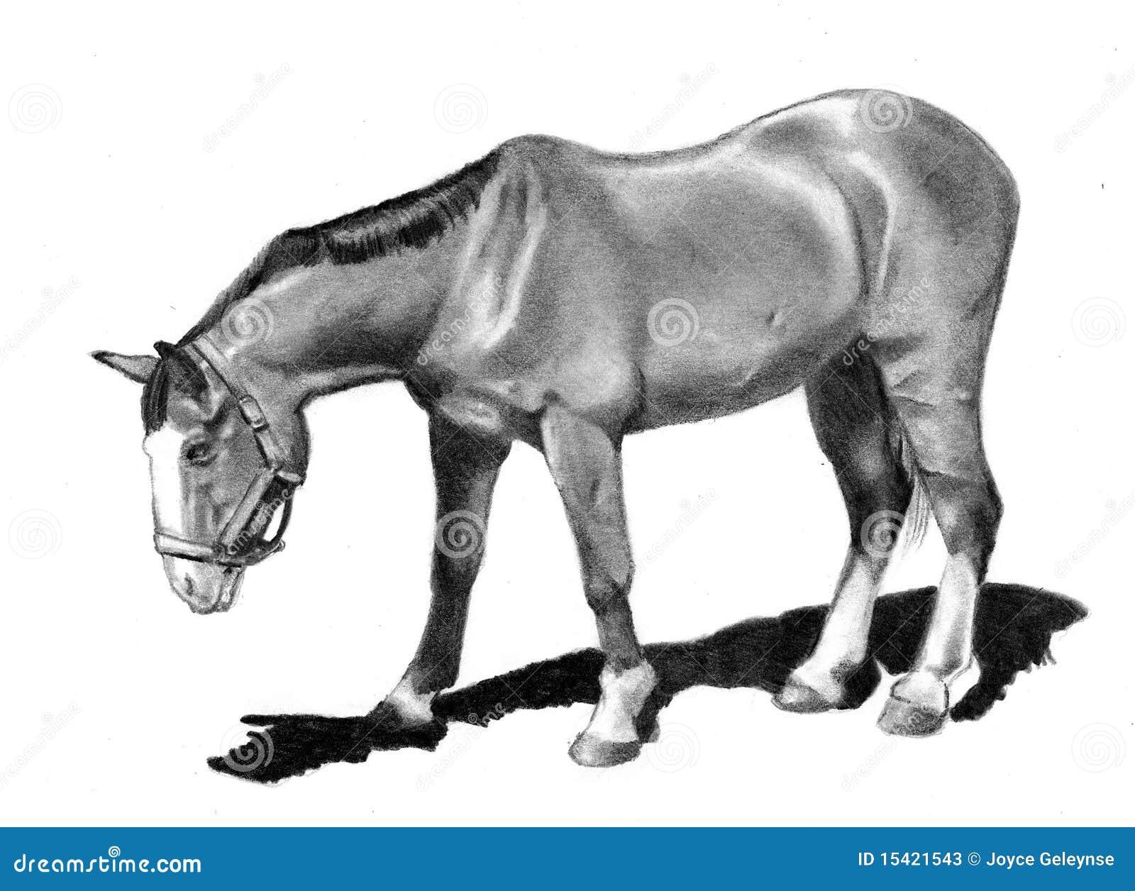 Desenho De Lapis Do Cavalo Que Olha Para Baixo Ilustracao Stock